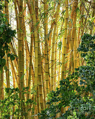 Photograph - Dancing Bamboo by Sabrina L Ryan