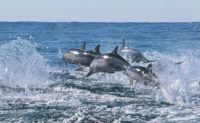 Photograph - Dancing Dolphins by Cheryl Strahl