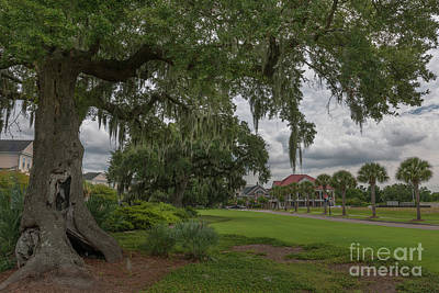 Photograph - Daniel Island - Southern Live Oak Tree by Dale Powell