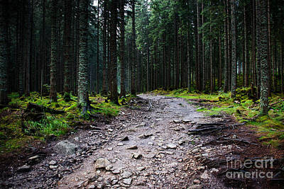 All You Need Is Love - Dark spruce forest after rain by Jozef Jankola