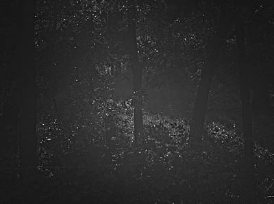 Photograph - Dark Steamy Woods by Philip A Swiderski Jr