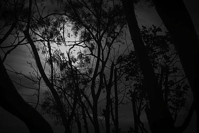 Photograph - Dark Woods by Eric Christopher Jackson