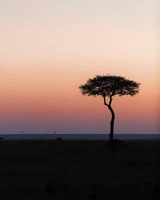 Miles Davis - Dawn in the Mara 02 by Murray Rudd