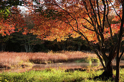Dawn Lighting Rhode Island Fall Colors Art Print