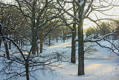 Photograph - Dawn On A Snow-covered Landscape by Kevin McCarthy