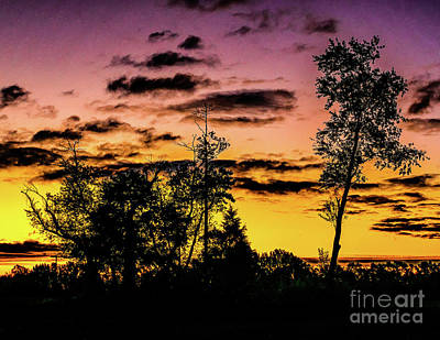 Photograph - Daybreak Thru The Trees by Nick Zelinsky