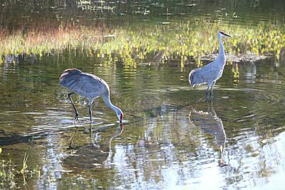 Photograph - Daydreaming Sandhills In Pond by Carol Groenen