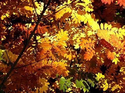 Digital Art - Days Of Autumn 12 by Will Borden