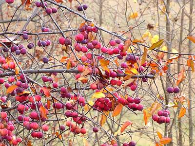 Photograph - Days Of Autumn 20 by Will Borden