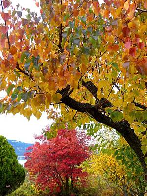 Photograph - Days Of Autumn 29 by Will Borden