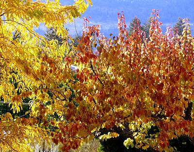 Photograph - Days Of Autumn 30 by Will Borden