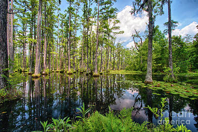Photograph - Dazzling Cypress Reflections by Dan Carmichael