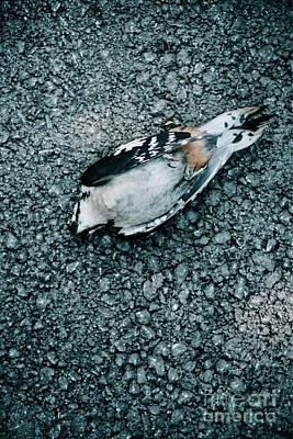 Photograph - Dead Bird by Jelena Jovanovic