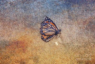 Digital Art - Dead Butterfly On Beach Sand by Randy Steele