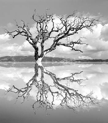 Photograph - Dead Tree Reflected As Though In Water by Diane Miller