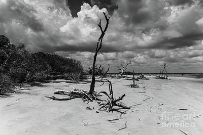 Photograph - Dead Wood Beach by Dale Powell