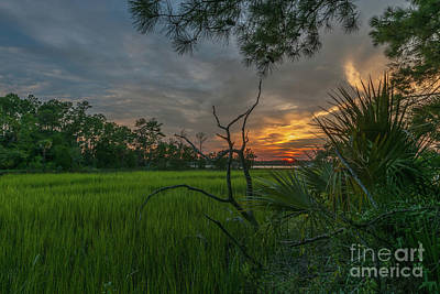 Photograph - Dead Wood Sunrise by Dale Powell