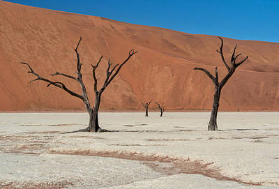 Art Print featuring the photograph Deadvlei Namibia  by Rand