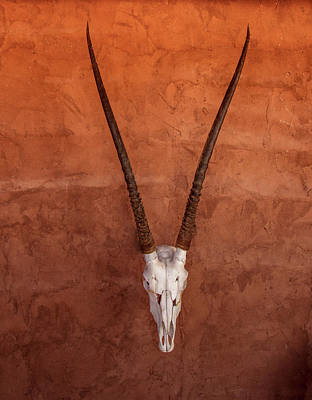 Photograph - Decorative Oryx by Jean Noren