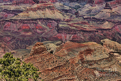 Photograph - Deep Color Grand Canyon National Park  by Chuck Kuhn