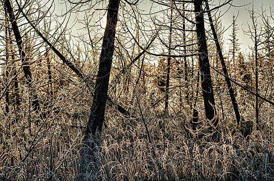 Photograph - Deep Frost by Doug Gibbons
