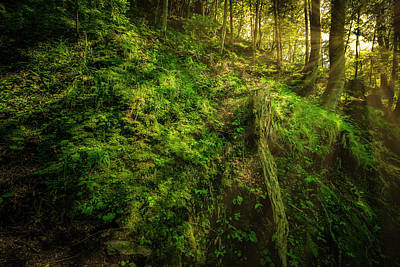 Photograph - Deep In The Forests Of Bavaria by David Morefield