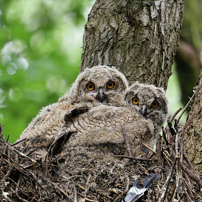 All You Need Is Love - Deep in the woods... Eurasian Eagle Owl by Ralf Kistowski