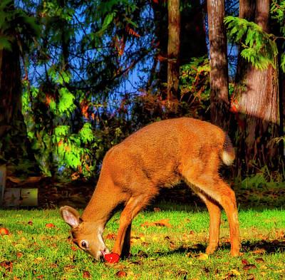 Photograph - Deer Eating Apple by Garry Gay