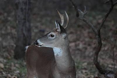 Photograph - Deer In Twilight 3657 by John Moyer
