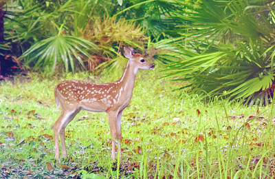 Photograph - Deer by Larah McElroy