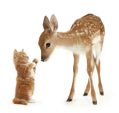 Photograph - Deer Little Friend by Warren Photographic