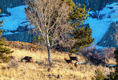 Photograph - Deer On The Mountainside by Steve Krull