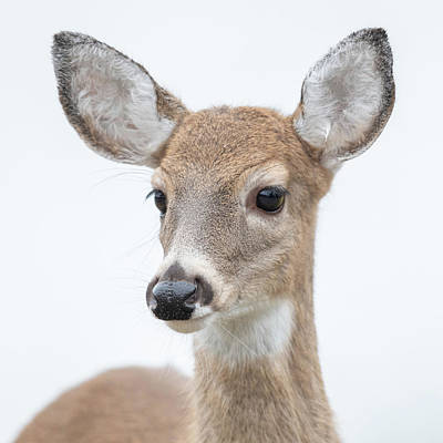 Wall Art - Photograph - Deer by Phil Thach