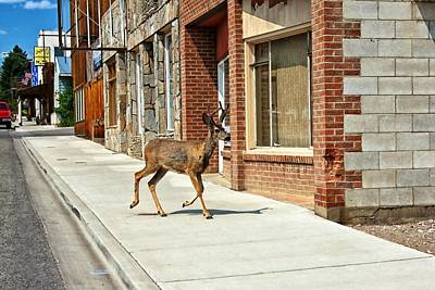 Photograph - Deer Running Downtown Challis, Idaho by Tatiana Travelways
