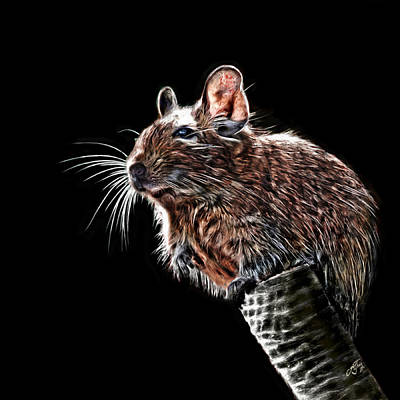 Digital Art - Degu by Andreas Theis