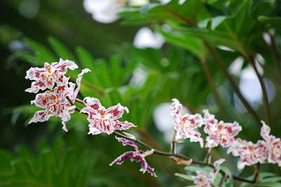 Purely Purple - Floral Gems by Brenda Burns