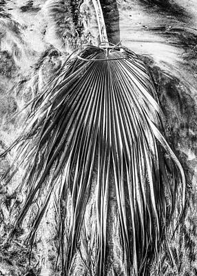 Photograph - Delicate Fan by Joseph S Giacalone