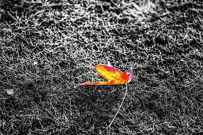 Photograph - Delicate In Autumn by Joseph S Giacalone