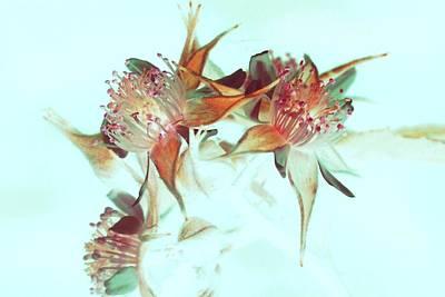 Digital Art - Demure by Ajp