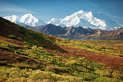 Photograph - Denali Autumn by Tim Newton
