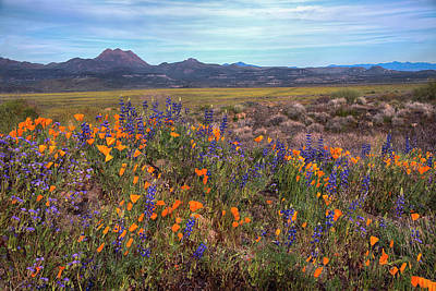 Photograph - Desert Blooming Flowers In The Springtime by Dave Dilli