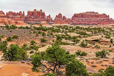 Target Threshold Nature - Desert Garden by Clyn Robinson
