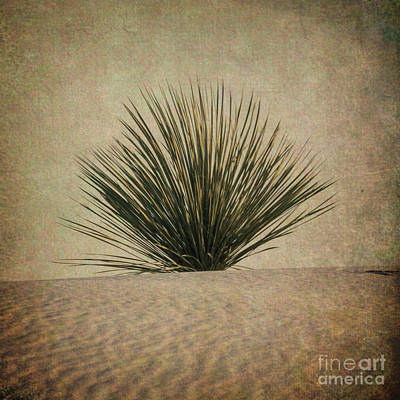 Photograph - Desert Grass by Doug Sturgess