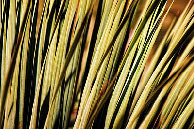 Photograph - Desert Grasses II by Leda Robertson
