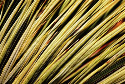 Photograph - Desert Grasses IIi by Leda Robertson