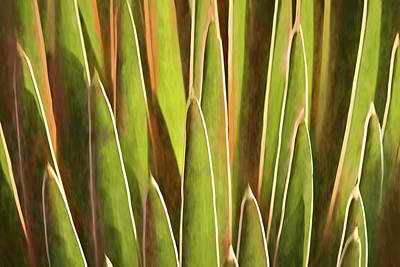 Photograph - Desert Growth I by Leda Robertson