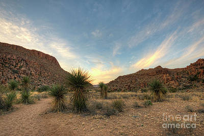 Photograph - Desert Hike by Joe Sparks