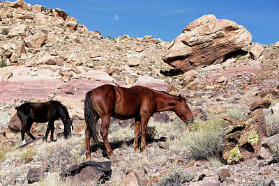Photograph - Desert Horses by Kathleen Bishop
