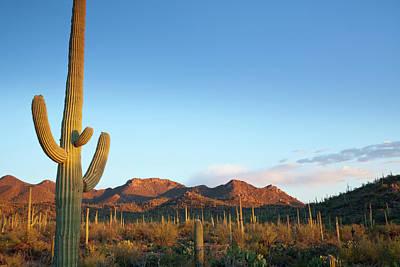 Photograph - Desert Landscape Filled With Cactuses by Kencanning