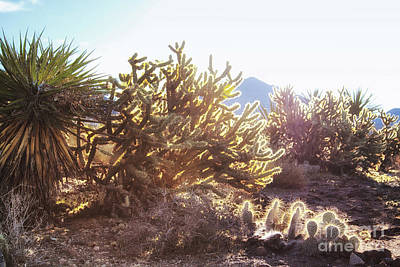 Photograph - Desert Morning Light 2 by Tatiana Travelways